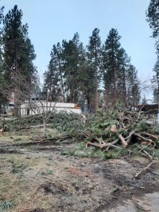 Trees damaged by storms