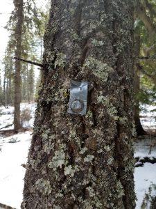 Tree treatment