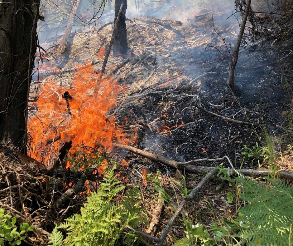 Wildfire in trees